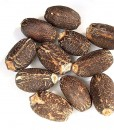 JATROPHA-CURCAS-SEEDS