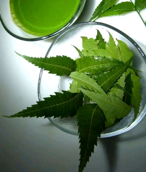 nEEM-eXTRACTS